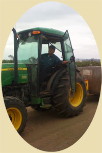 Domenic Carinalli driving tractor with grape harvest